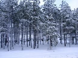 az winter 2